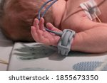 Small photo of Premature baby hand with a premature infant pulse oximeter, selective focus. Newborn is placed in the incubator, baby born prematurely. Neonatal intensive care unit