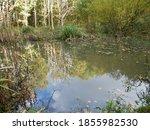 Autumn Day At Soggy Bottom Pond