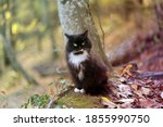 photo of a beautiful cat in the ... | Shutterstock . vector #1855990750