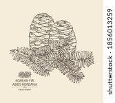 background with korean fir ... | Shutterstock .eps vector #1856013259