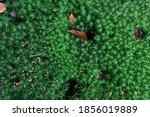 green moss background overhead...   Shutterstock . vector #1856019889