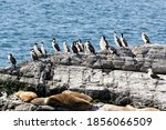 Cormorants And Sea Lions In The ...