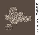 background with korean fir ... | Shutterstock .eps vector #1856107159