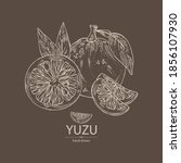 background with yuzu  fruts ... | Shutterstock .eps vector #1856107930