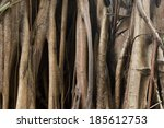 Closeup Of Banyan Tree Trunk...