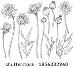 collection of hand drawn... | Shutterstock .eps vector #1856332960