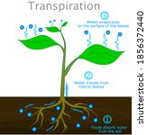 Transpiration Stages In Plants....