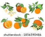 colorful orange branches and... | Shutterstock .eps vector #1856590486