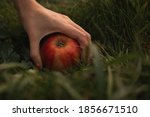A Hand Picks Up A Fallen Apple...