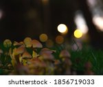 Set Of Small Mushrooms Among...