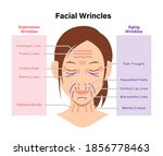 expression wrinkles and aging...   Shutterstock .eps vector #1856778463