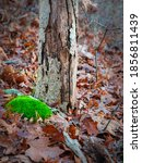 Fresh Green Moss  Fallen Oak...