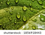 Beautiful Water Drop On Leaf At ...