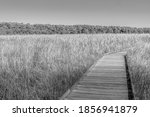 Boardwalk Through Marsh In...