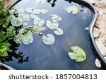 Decorative Pond With Green...