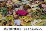 A Lost Red Leather Women S...