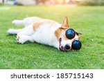 Dog Wearing Sunglasses On The...