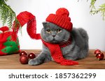 A Gray Cat In A Red Knitted Hat ...