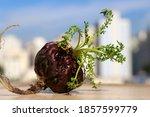 Small photo of Peruvian Maca aphrodisiac powerful root