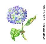 Watercolor Hydrangea Flower ...