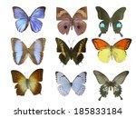 butterfly on white | Shutterstock . vector #185833184