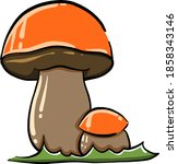 Two Mushrooms  Illustration ...