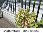 Plant White Wooden Fence Close...