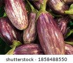 Small photo of Macro photo of vegetable eggplant.