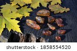 Pieces Of Natural Baltic Amber...