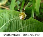 A Beautiful Little Golden...