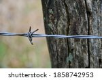 Barbed Wire On A Barbed Wire...