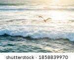 Pelican Flying Over The Ocean...