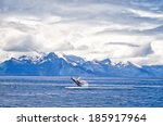 Painting Of Humpback Whale...