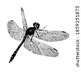 dragonfly engraving style.... | Shutterstock .eps vector #1859251873