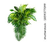 Green Leaves Of Tropical Plants ...