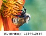 Closeup Of A Bee Pollinating An ...