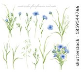 Watercolor Illustration Of Flax ...