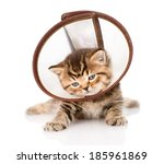 Stock photo british kitten wearing a funnel collar isolated on white background 185961869