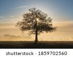 Silhouette Of A Solitary Oak...
