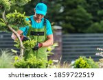Residential Backyard Garden Maintenance Performed by Pro Gardener. Trimming Decorative Tree Branches. - stock photo