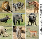 Nine African Animal Collage....