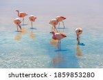 James Flamingo  Phoenicoparrus...