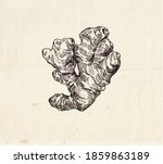 ginger root ink  drawing ... | Shutterstock .eps vector #1859863189