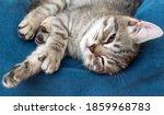 Grey Small Cat Sleeping On The...