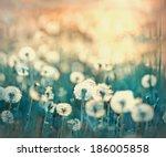 dandelion field   dandelion... | Shutterstock . vector #186005858