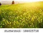 beautiful green hills in... | Shutterstock . vector #186025718