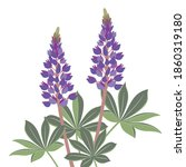 Lupines  Flowers  Images Of...