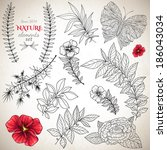 set of hand drawn plants and...   Shutterstock .eps vector #186043034