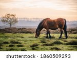 Wild Pony Eating Grass In The...