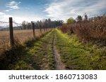 Path Between Cornfields On A...